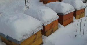 Пчеловодство Украины и решение текущих задач