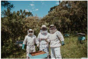 Бджільництво в Україні